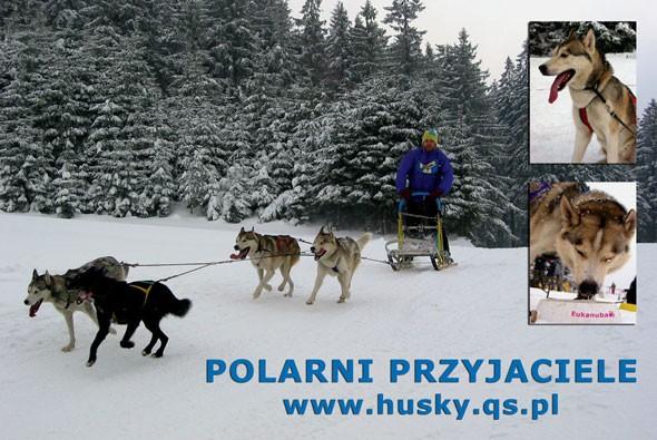 Plakat Polarni Przyjaciele